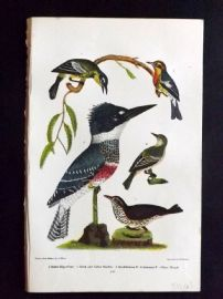 Alexander Wilson 1877 Bird Print. Belted Kingfisher, Black And Yellow Warbler,